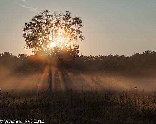 mist fog sunrise illinois dew preserves sunbeams lakecounty foggyscenes halfdayforestpreserve lcfpd