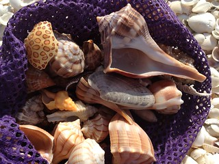 Spoils from Sanibel - the shells are rolling in! | by Erin *~*~*