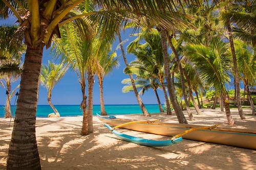 beach hawaii maui mamas plams paia mamasfishhouse palmstree kuaucove nikond700 nikon28300mm