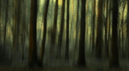 wood kilkenny ireland nature forest landscape harrypotter impressionism photoart irlanda ierland jenkinstownwood edwarddullardphotographykilkennycityireland me2youphotographylevel1