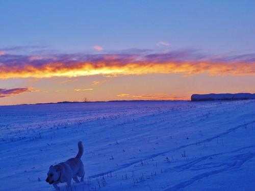 sunset dog snow