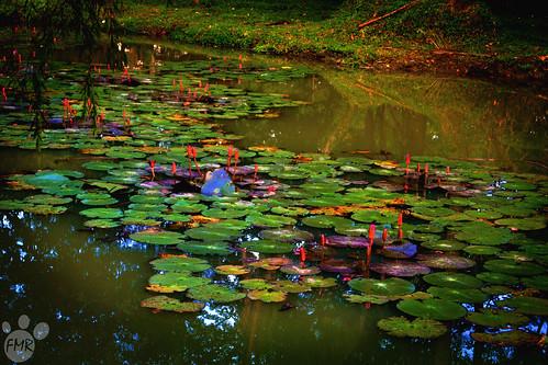 Lagoon | by feryswheel