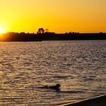 Sunset Illuminating Swimming Dog