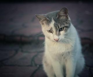 Street Cat | by Mehmet Atacan