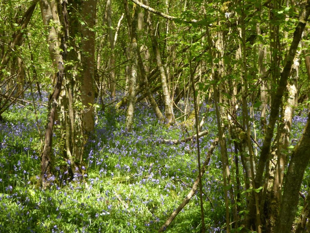 Siccaridge woods