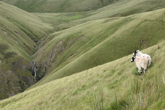 Guardians of Carlingill, Howgill Fells, Yorkshire Dales National Park near Sedbergh, Cumbria, UK