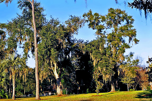 park trees sunset grass florida palmtrees spanishmoss ocala