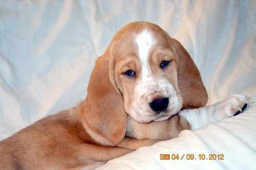 gol pup girl 100912