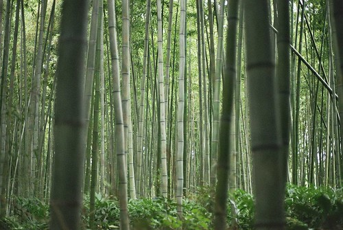 bosque de bambú | by Rebelation around the world
