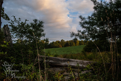 morning trees sky field clouds sunrise post maine newengland limerick tamron2875mm sonya200 rangeerd sharedperspectivesphotography