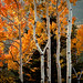 fall in colorado {explored} by JPutsch