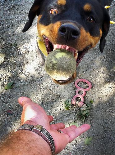 Dog Park Arlington, VA