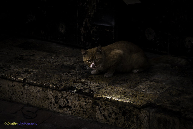 Cat on the dark