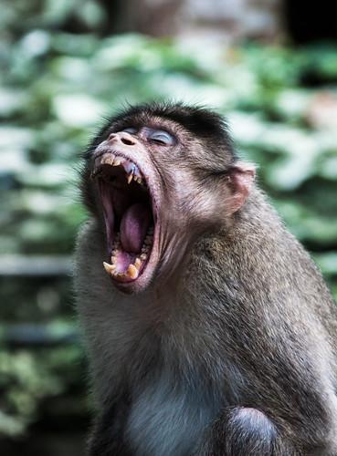 Angry... ? | by Navaneeth K N