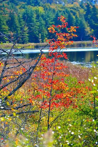 autumn trees fall fauna nikon scenery novascotia seasons fallcolors lakes autumncolours rivers streams maritimes beaverbank novsscotia nikond3100 beaverbankns