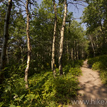 Swiftcurrent Trail