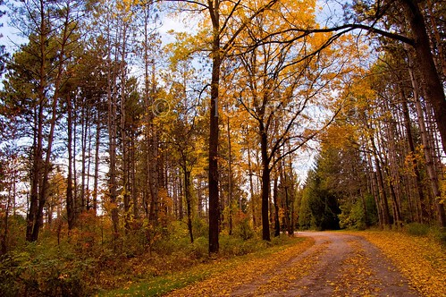 earlrowe fallcolors landscape pedjaphotography predragg fall sonya200 sal18250 pedja predrag sonyalpha scenery sonyalphaphotography a200 pedjag predragphotography pedjaphoto