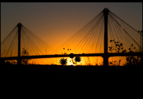 bridge sunset sun plant silhouette canon illinois il mississippiriver dslr clarkbridge 70200mm ef70200mm altonillinois cablestayedbridge altonil 70200mmf28 nrbelex 5dmkiii 5diii