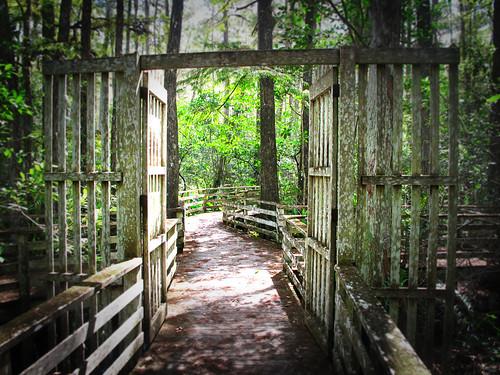 trees woods dof florida walkway boardwalk enter depth woodengates