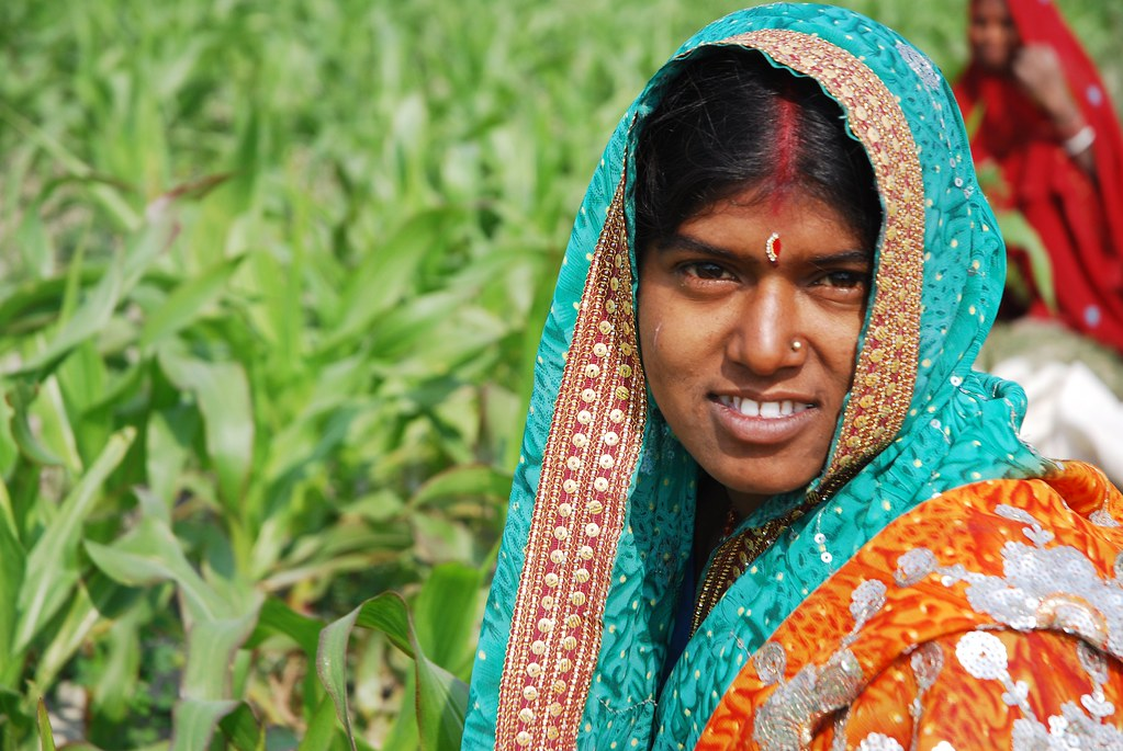 Farmer weeding maize field in Bihar, India
