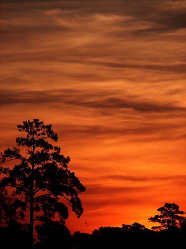 sun tree silhouette sunrise skyscape jupiter
