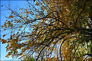 Fall Foliage - © Patty Keigan