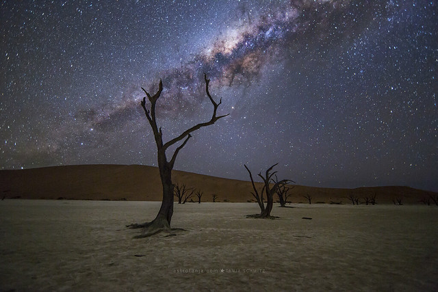 Deadvlei. Isolated in desolation.