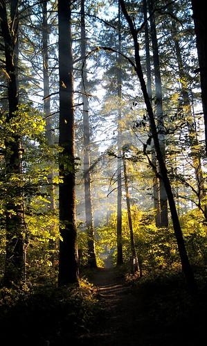 trees light oregon forest sunrise landscape estacada milomciverstatepark picsay htcdroidincredible2 flickrandroidapp:filter=none