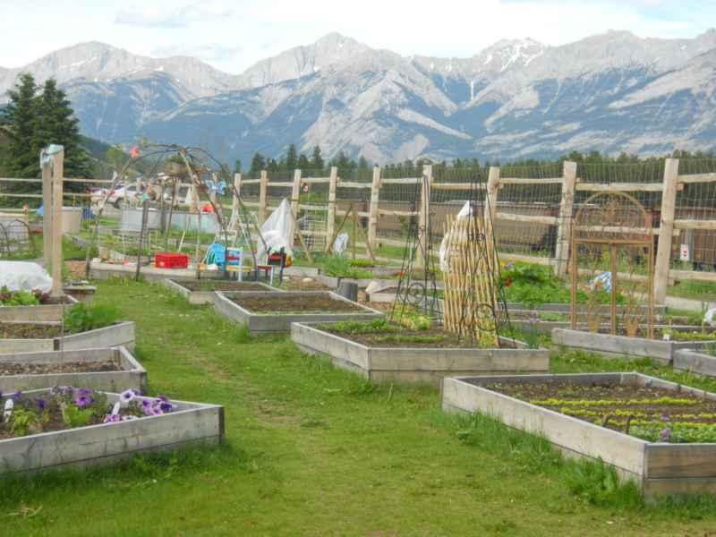 Jasper Community Garden Canada 2