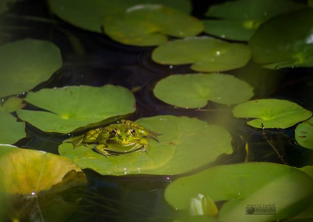 La vida en el estanque.