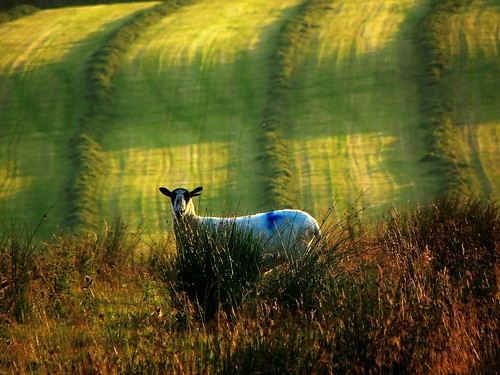 city light wool nature landscape sheep magic nights 1001 moorland pendle thegalaxy trawdenforest mygearandme mygearandmepremium mygearandmebronze mygearandmesilver mygearandmegold mygearandmeplatinum mygearandmediamond galleryoffantasticshots rememberthatmomentlevel4 rememberthatmomentlevel1 rememberthatmomentlevel2 rememberthatmomentlevel3 rememberthatmomentlevel7 rememberthatmomentlevel9 rememberthatmomentlevel5 rememberthatmomentlevel6 rememberthatmomentlevel8 rememberthatmomentlevel10 globalaward2014
