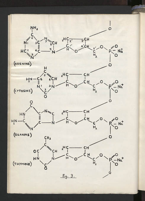 Chemical Structure Of Dna Base Sequence This Diagram Demon