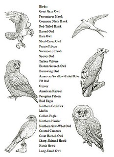 North American Birds Of Prey Notebooking Report Pages Sam Flickr