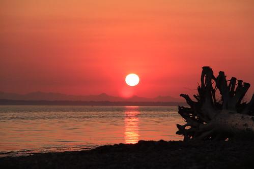 ocean sunset tree landscape tramonto pacific driftwood treestump fallsunset