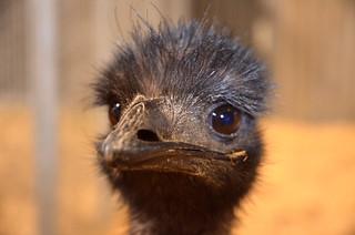 Emu | by Sascha Grant