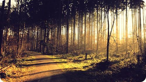 trees nature sunshine forest sunrise landscape switzerland magic flare