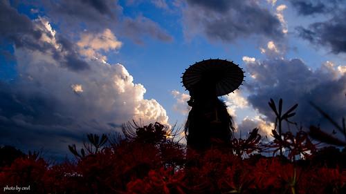 autumn nature landscape japanese sony snap kimono 秋 dd dollfie volks tamron a09 彼岸花 曼珠沙華 朝 曇り 秩父 和服 2875mm 巾着田 a900 dollfiedream cnvl ソニー α900 ボークス 森川由綺 morikawayuki 野外撮影 無風 もりかわゆき dd森川由綺 サイタマ゚∀゚