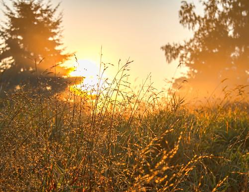 park trees summer fog outdoor september redmond 2012 marymoor lightroom ef24105mmf4lisusm canoneos5dmarkiii