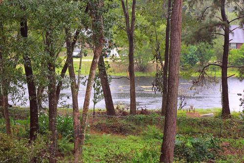 lake rain pond florida swamp