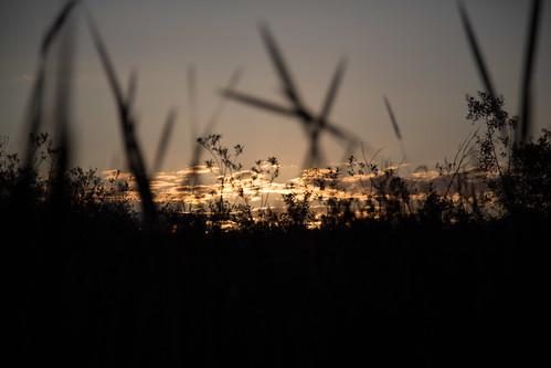 park summer sunrise flickr bokeh outdoor september depthoffield redmond autism 2012 marymoor lightroom ef24105mmf4lisusm sooc canoneos5dmarkiii