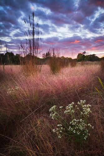 autumn sunset ohio fall nature colors landscape outdoors evening dusk grasslands swanton toledoareametroparks oakopeningspreserve oakopeningpreserve