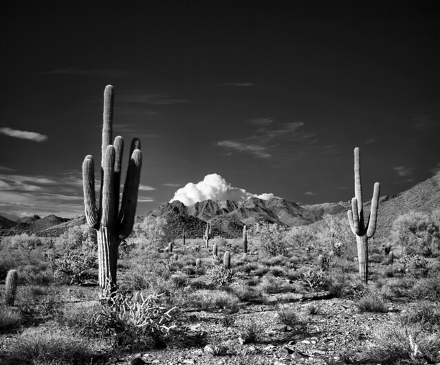 McDowell Sonoran Preserve, Scotsdale Arizona