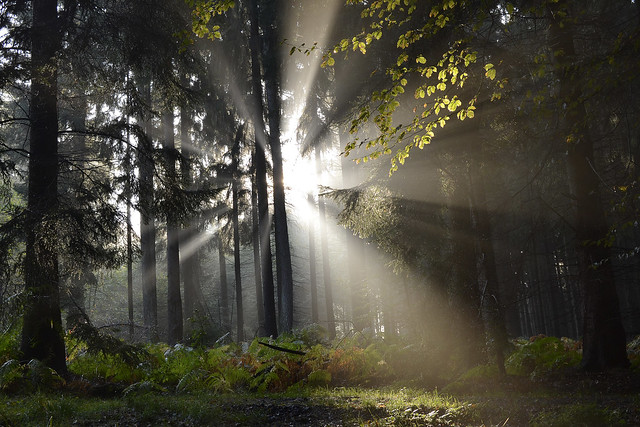 _DSC4621 Herbstwald in der Morgensonne-Autumn forest in the morning sun