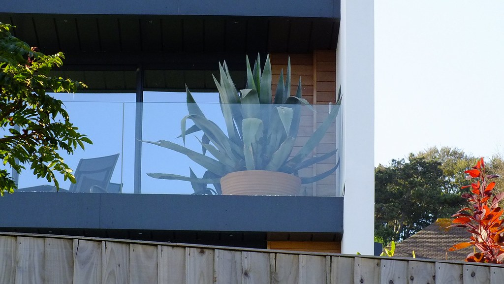 Large Agave Americana on Balcony Torquay | Photographs of pa… | Flickr