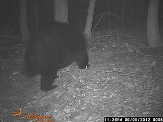 A Busy Night on Distant Hill - Visitor #3   by Distant Hill Gardens