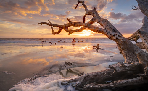 boneyardbeach boneyardjourneys canon clouds coast color dawn driftwood georgia jekyllisland landscape light mood morning nature reflection sand seafoam seascape shore storm summer summersolstice sunrise tree water
