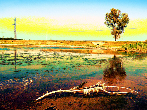 sun lake reflection tree yellow power salt line trail
