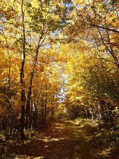 Yellow Woods, Hartley, Duluth | by Sharon Mollerus