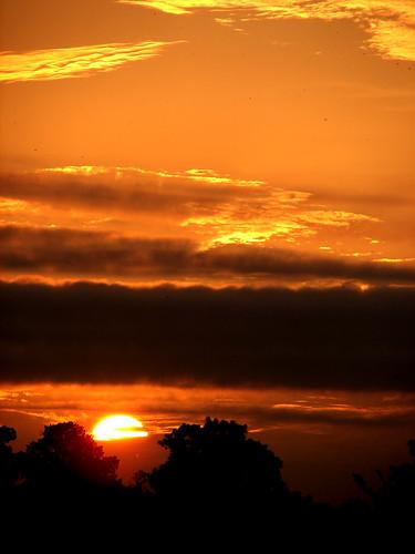 morning sun nature sunrise golden early