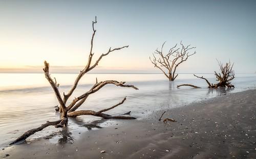 coastal boneyardbeach edistobeach charleston southcarolina sunrise driftwood deadtree seascape lowcountry sunglow longexposure curtiscabana